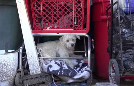 Little White Dog Rescued Just In Time For A Special Delivery [VIDEO]