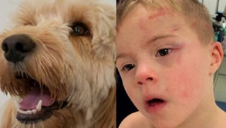 Dog Saves Her Boy With Down's Syndrome From A Tumble Dryer