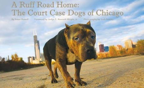 Safe Humane Chicago Delivers Justice For Animals And You Can Help