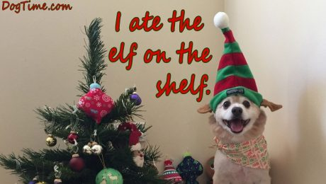 30 Dog Christmas Cards To Share With Your Friends And Family