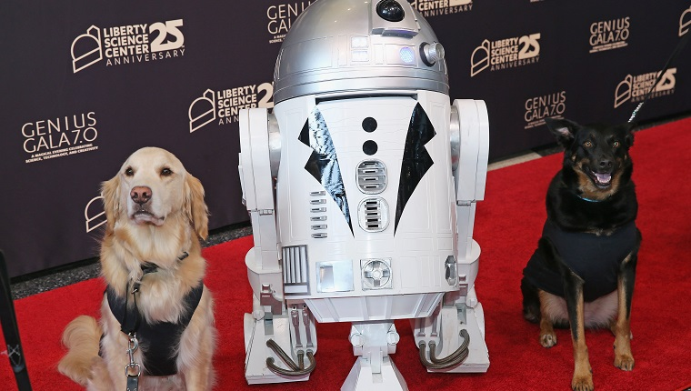 Dogs pose with R2D2 on red carpet during the Genius Gala 7.0 at the Liberty Science Center in Jersey City