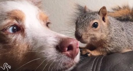 Squirrel Appreciation Day: Celebrate Your Dog's Favorite Thing In The World
