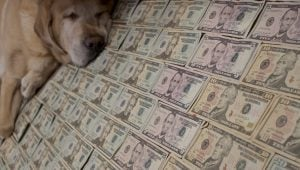 Pet Expenses That Are Tax-Deductible
