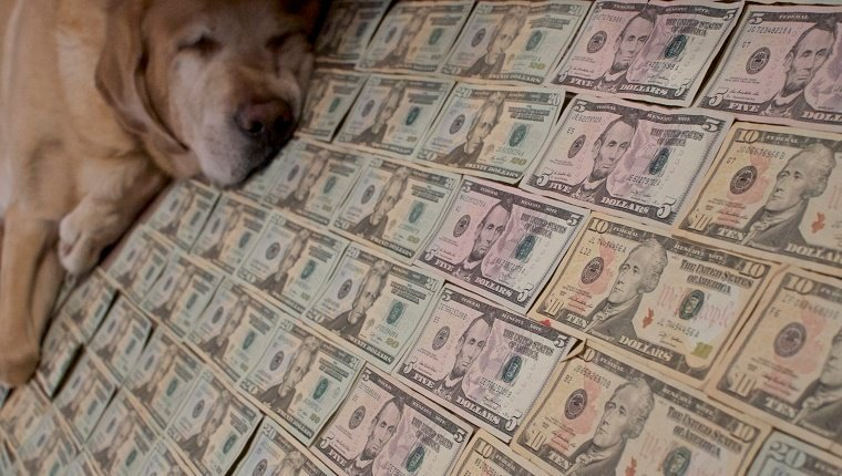 a yellow labrador retriever lays on a bed of money
