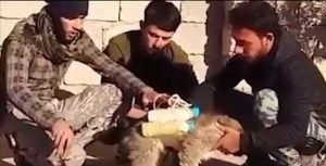 ISIS Suicide Puppy Strapped With Explosives Is Saved By Rebels [VIDEO]