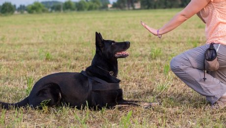 The Alpha Dog Myth: Is Dominance Training Mistreatment?