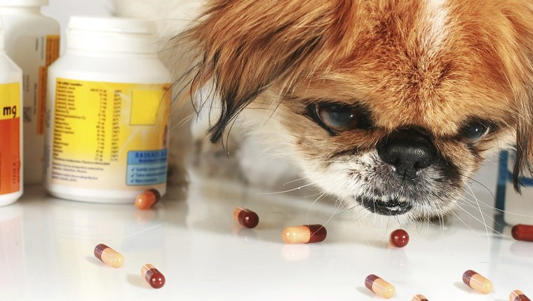 Dog and pills over white background.