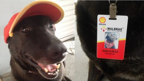 Dog Becomes The Cutest Employee At The Gas Station Where He Was Abandoned