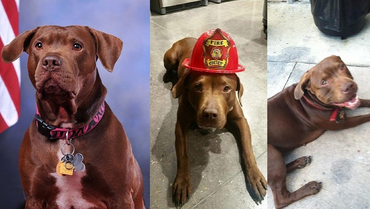 emergency-responders-adopt-dogs-4