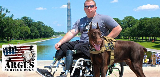 K-9 companions for veterans. (Photo Credit: Argus Service Dog Foundation)