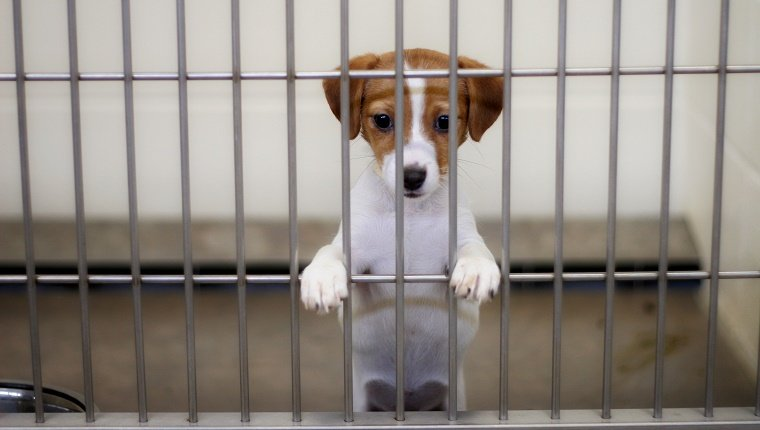 dog eagerly awaits adoption from the animal shelter