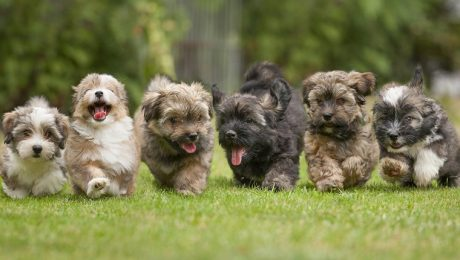 10 Fun Ways To Celebrate National Puppy Day With Your Pup