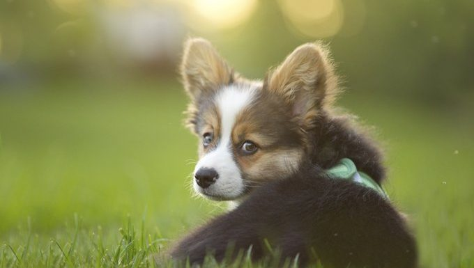 cute puppy in grass