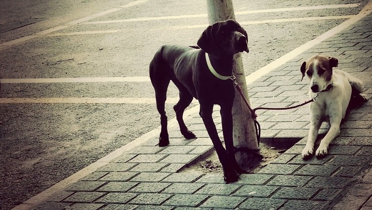 Dogs Tied To Pole On Sidewalk