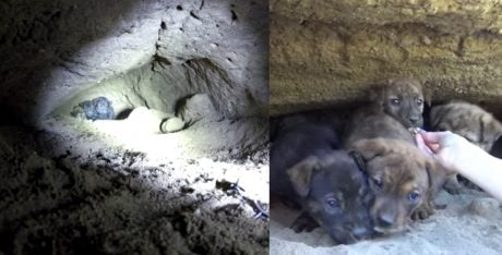 Puppies Rescued From Cave 18 Feet Underground [VIDEO]
