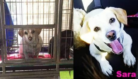 39 Pics Of Happy Rescue Dogs Before And After [Photo Gallery]