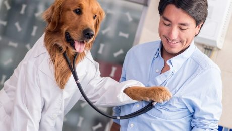 10 Jobs Dogs Could Do Better Than Humans