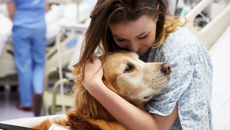 Sweet Loving Therapy Dog Visiting Young Happy Female Patient In Hospital