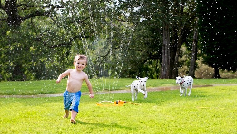 Boy playing in a water sprinkler and two dogs chasing him