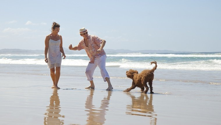Retired Couple on beach with Dog