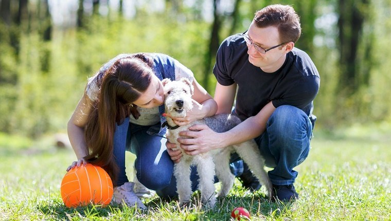 happy family hugging a dog in the summer park
