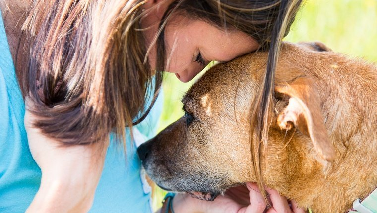 Senior dog consoles a young woman as they share a quiet moment of understanding