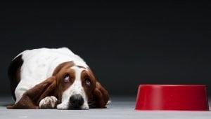 10 Foods And Supplements That Help Dogs With Arthritis Pain