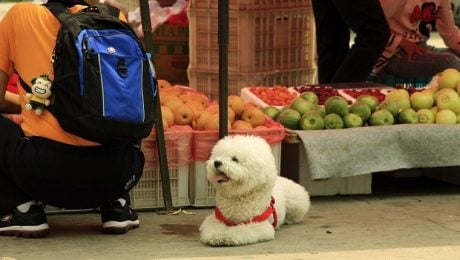 10 Foods That May Help Fight Or Prevent Cancer In Dogs