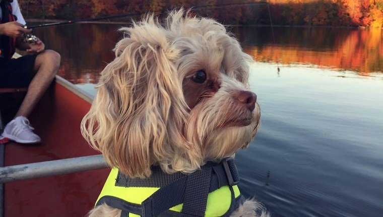 Shih Tzu In Boat With Man Fishing Over Lake During Autumn