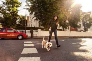 5 Reasons To Stop Looking At Your Phone While Walking Your Dog