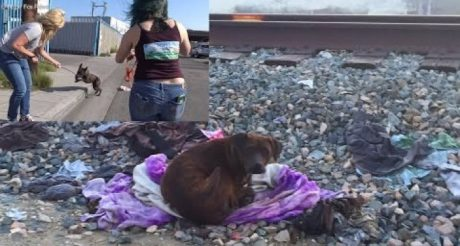 Homeless Pit Bull Protects Her Dead Friend For Two Weeks [VIDEO]
