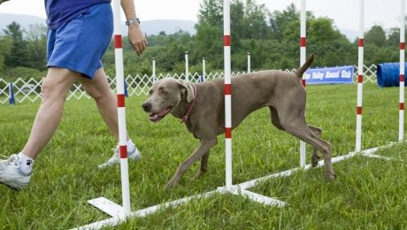 7 Most Popular Dog Training Methods