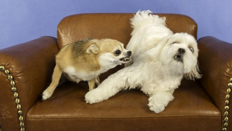 Socializing Adult Dogs and the Importance of Maintaining Socialization
