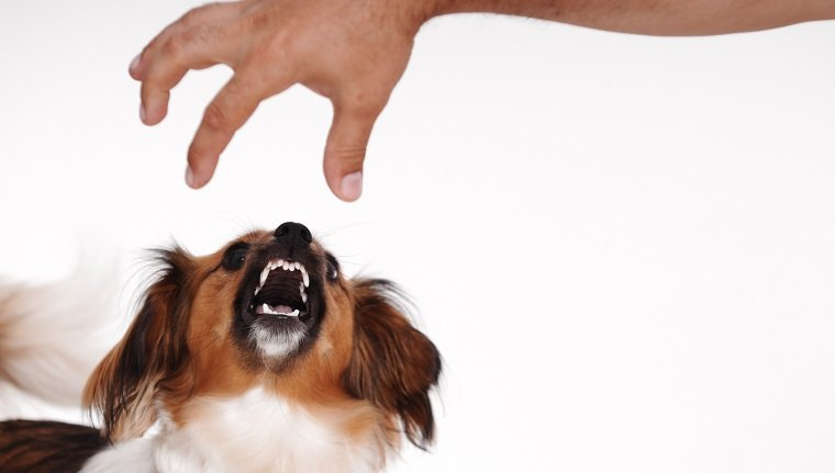 how to stop your dog from growling