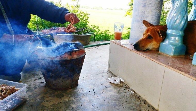 Dog Looking At Man Barbequing Meat At Porch