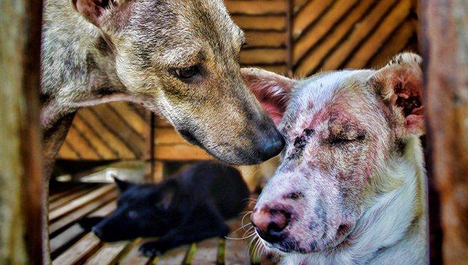 dogs together, one has a skin condition