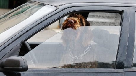 What To Do If You See A Dog In A Hot Car