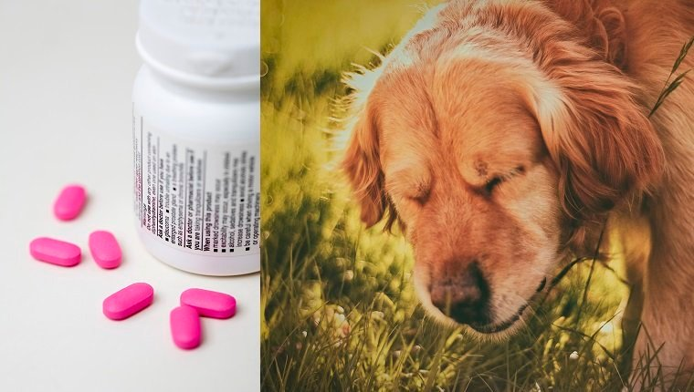 Benadryl For Dogs: Dosage, Uses, And Side Effects - Dogtime