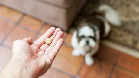 Diazepam For Dogs: Uses, Dosage, And Side Effects