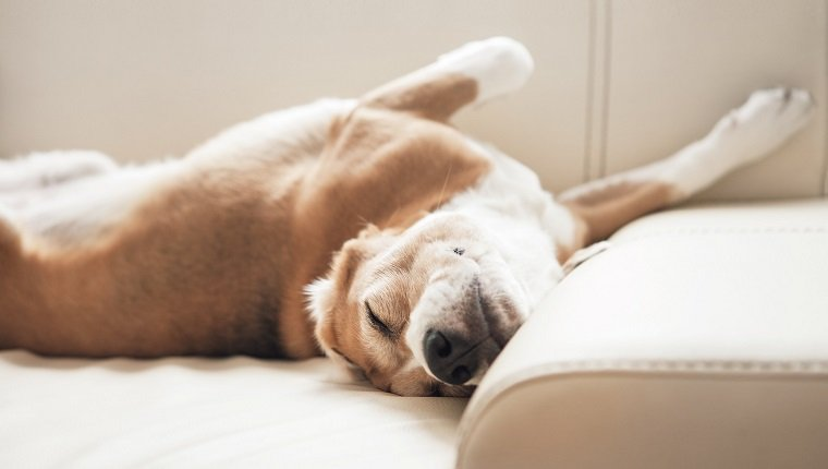 dogs on gabapentin side effects