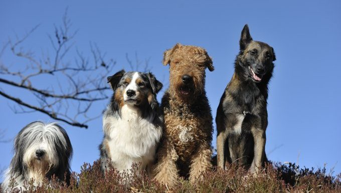 Pack Mentality: 5 Tips For Living With A Pack Of Dogs ...