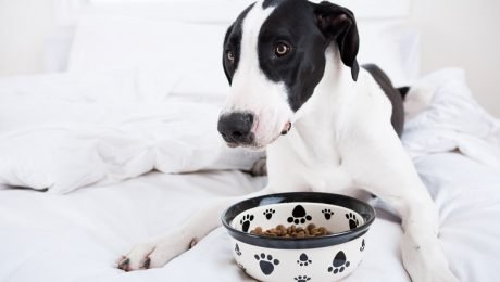 Myasthenia Gravis In Dogs: Symptoms, Causes, And Treatments