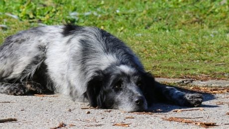 Amitriptyline For Dogs: Uses, Dosage, And Side Effects