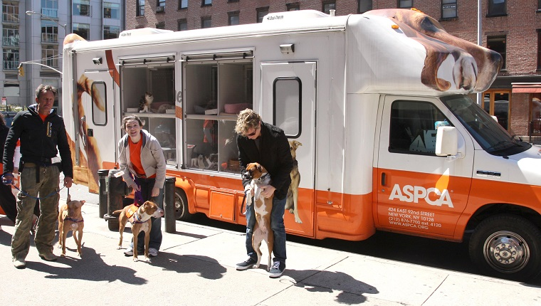 Facts About The ASPCA And What They Do For Dogs - Dogtime