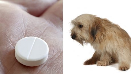 Buspirone For Dogs: Uses, Dosage, And Side Effects