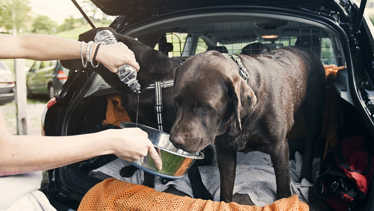 Giving Dogs a drink in the boot of the car