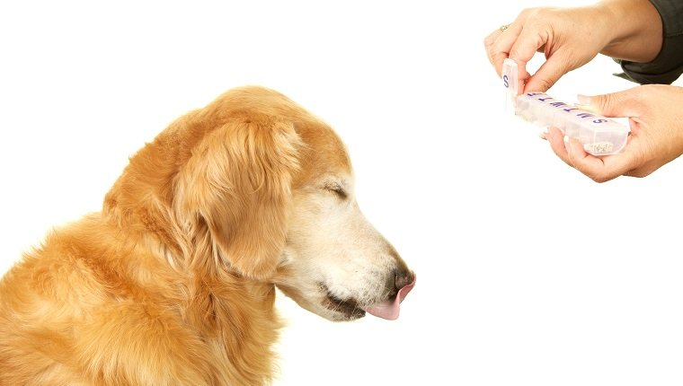 A golden retriever dog is closing his eyes and sticking out his tongue while his owner is holding out a pill for him from a daily pill organizer