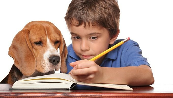dog watching boy take notes and study