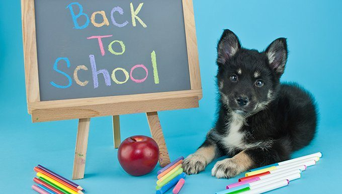 """dog sitting next to """"back to school"""" message on blackboard"""