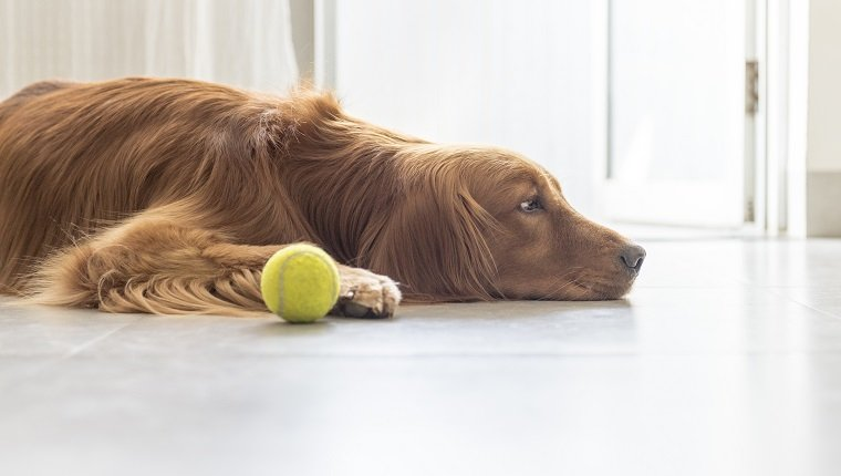 Pepcid For Dogs Dosage